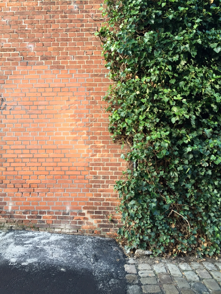 Vines and Brick